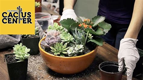 How To Create A Succulent Container Garden & Basic Care at