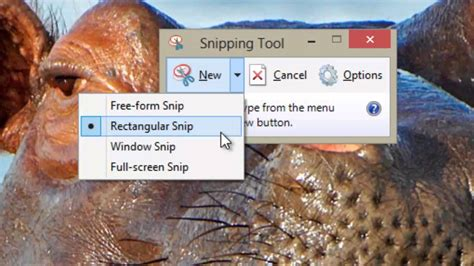 Snipping Tool (Windows 8) - YouTube