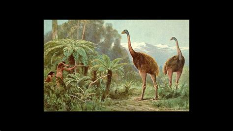 Why Did New Zealand's Moas Go Extinct?   Science   AAAS